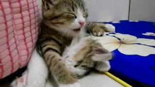 寝ちゃダメ thumbnail