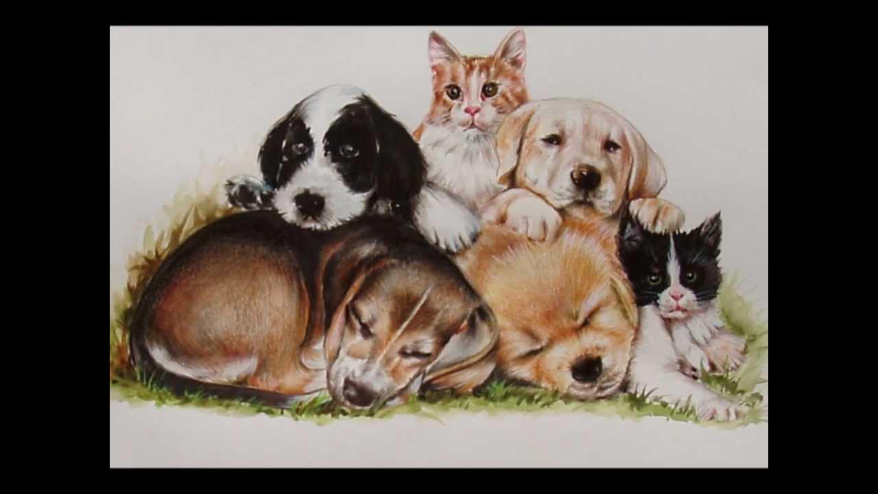 Ritratti di animali youtube for Disegni a matita di cani