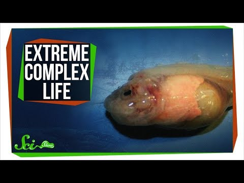 The Most Extreme Complex Life in the World