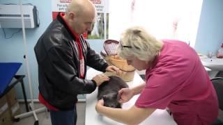 ЖК «Банзай», ветеринарная клиника(, 2014-12-09T08:22:16.000Z)