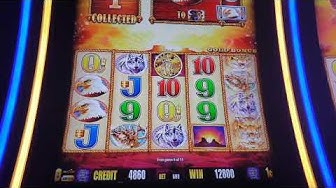 Buffalo Gold . Nice win on my Birthday at the Golden nugget