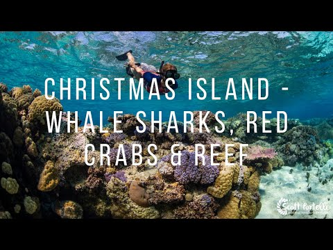 Christmas Island - Whale Sharks, Red Crabs & Reef