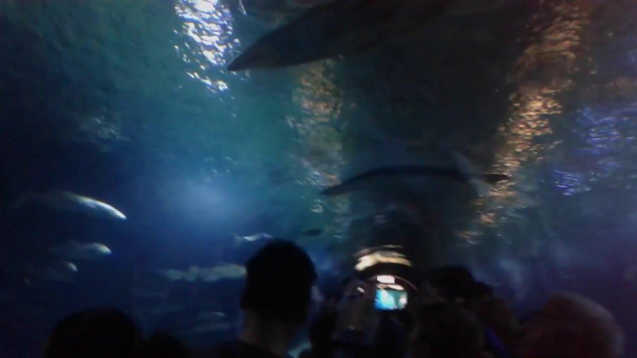 Oceanografic acuario de valencia 2016 youtube for Oceanografic valencia precio 2016