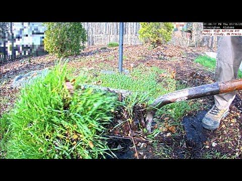 Ground Maintenance For Bird Feeders - Jan 16, 2020