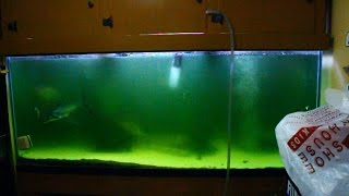 Green Water Problem In 300 Gallon!