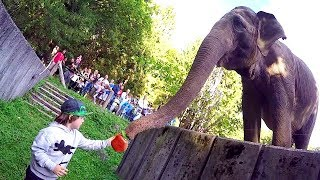 Kids and Wild Animals at the Zoo | Tim feeds Animals Elephant | Let's Go to the Zoo with TimKo Kid