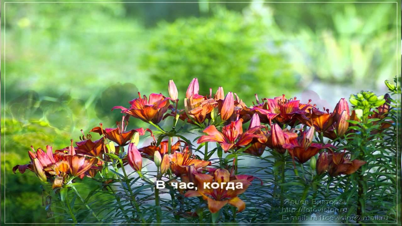 Кто поет городские цветы
