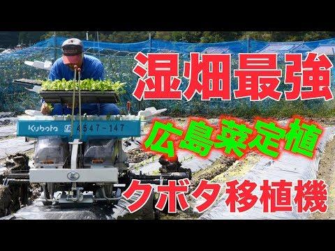 ゴボウ・ネギ収穫出荷作業とクボタ移植機#195