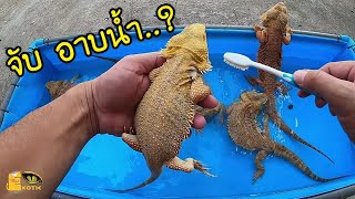 อาบน้ำ เบี๊ยดดราก้อน.. Dragon bathing