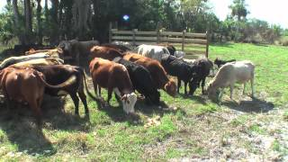 Agriculture Farm In Immokalee, Florida [HD] ©™