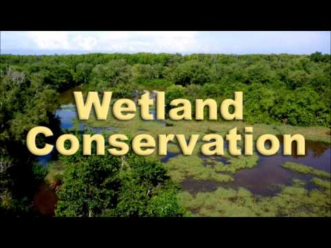 2014 06 05 ASEAN Breakfast Call : Wetland Conservation - Preserving Tropical Biodiversity