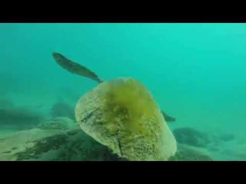 New Caledonia - Ouvea Loyalty Islands & Noumea