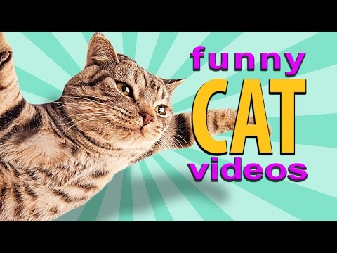 Funny Cat Videos - Flying Cat, Treadmill Cats, Cute Kittens