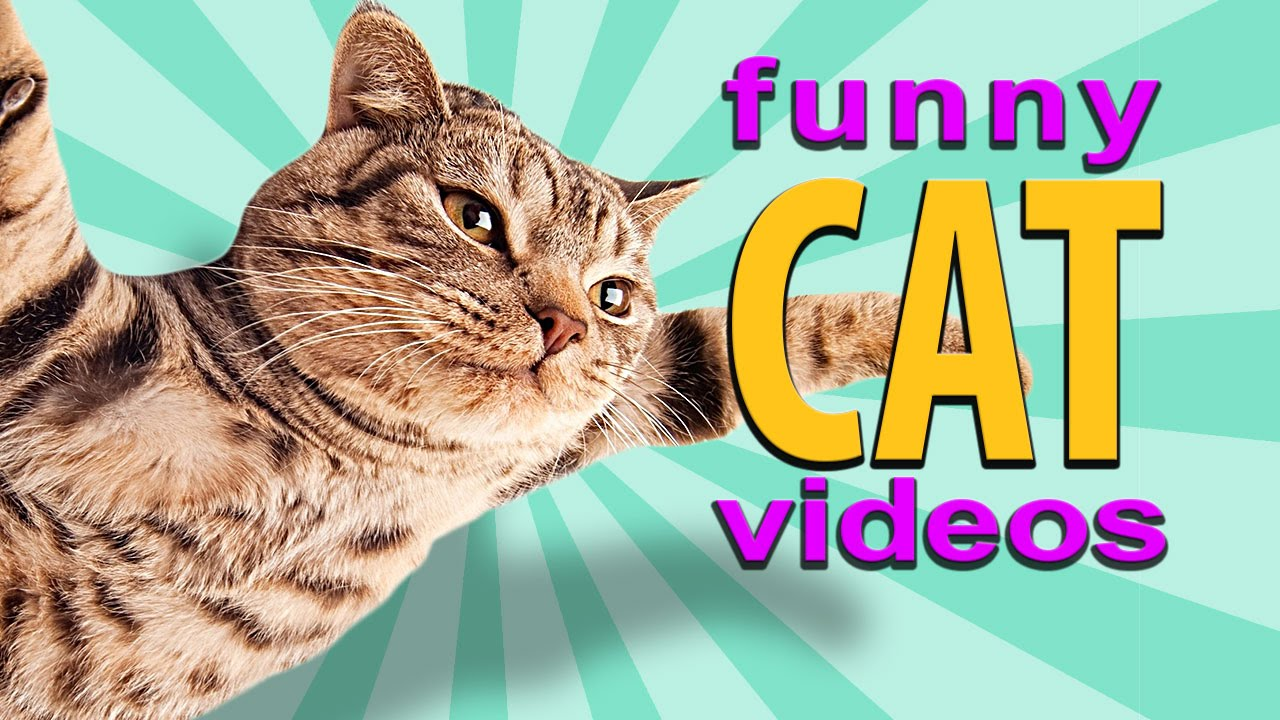Funny Cat Videos - Flying Cat, Treadmill Cats, Cute ... Funny Videos Cats