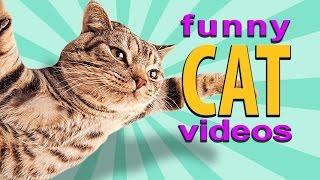Funny Cat Videos - Flying Cat, Treadmill Cats, Cute Kittens
