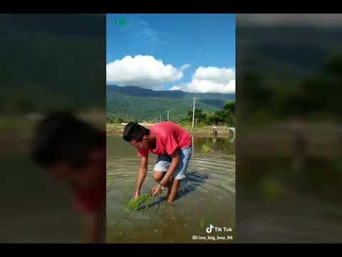 Video Tik Tok ~ Cari Nafkah Sendiri