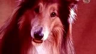 Говорящая собака (реклама) / Doritos II (advert)