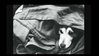 PSYCHONAUT 4   Eyes Of A Homeless Dog