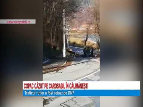 Copac cazut pe carosabil in Calimanesti