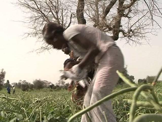 Sénégal (PAFA) Encourager le retour des jeunes vers agriculture