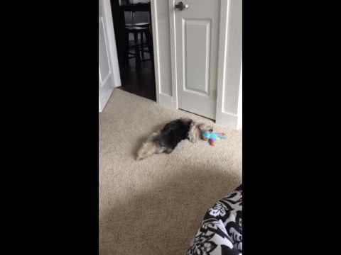 My crazy dog