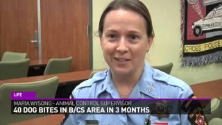 40 dog bites in B/CS area in 3 months