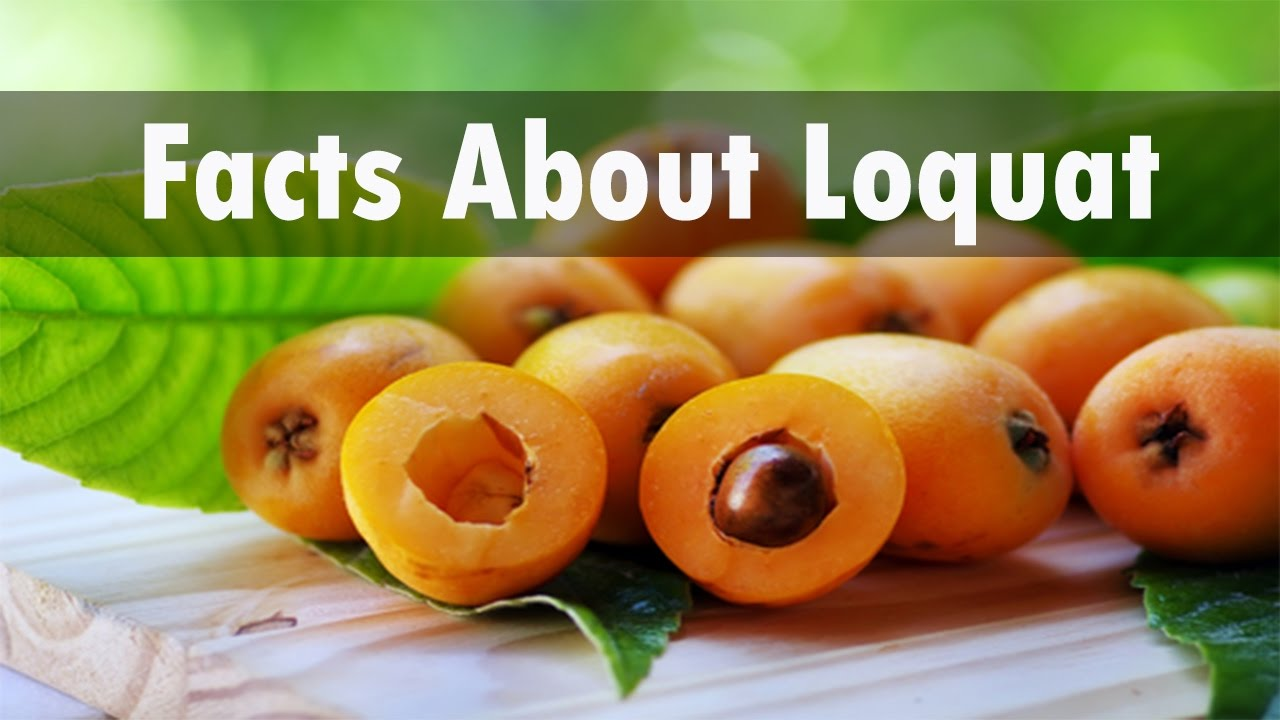 Interesting facts about loquat fruit youtube for Interesting facts about strawberries