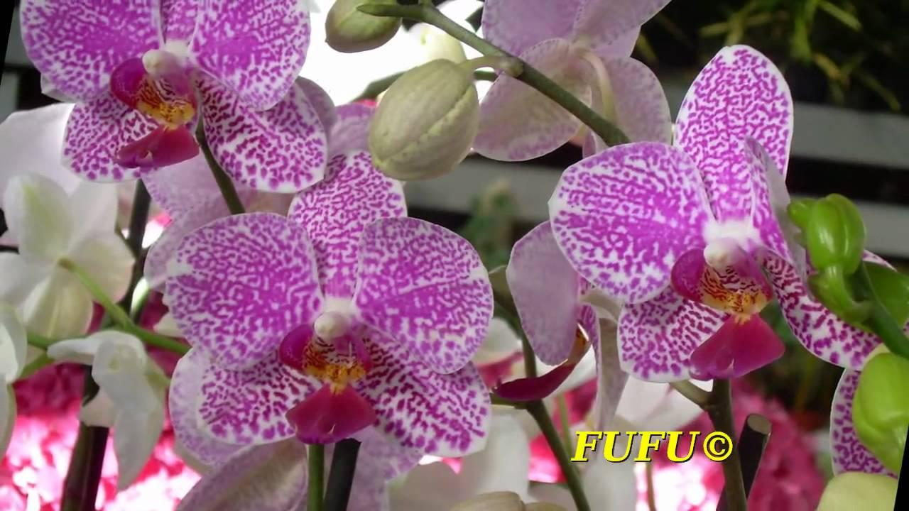orchidee tutte le specie