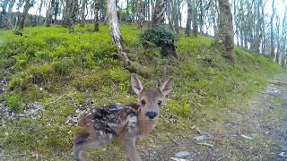 Baby Deer Encounter on Run