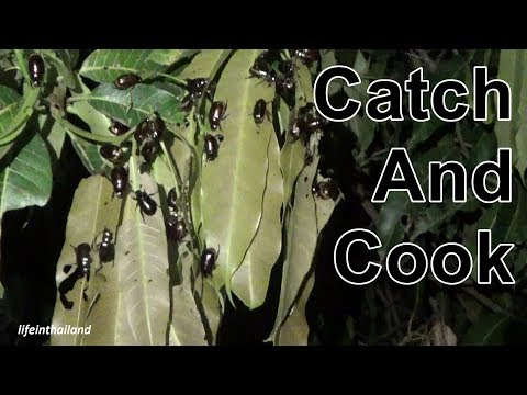 Catch and Cook, Jewel Beetle, Eating bugs in rural Thailand.