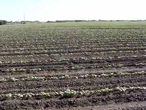 GEM Soil Fiber 100 Field Testing