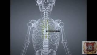 видео Лимфатическая система