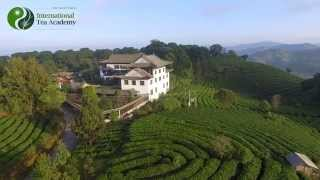 2016 ITA Certified Tea Sommelier Training Trailer