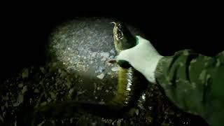 риболовля на миня (кінець травня, д. Неванка)