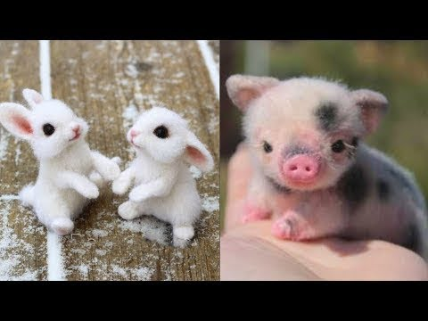 Funny Animals Compilation - Cutest Animals Ever 2019