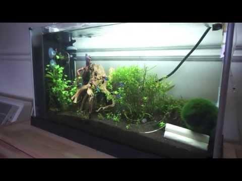 Exceptional Fluval Spec V Planted Nano Tank   YouTube