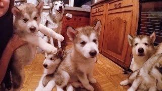щЕНКИ смешные животные! Вот как выбрать щенка ?