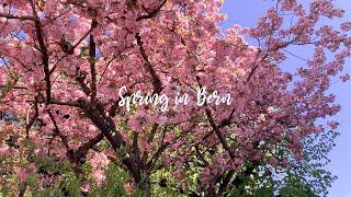 스위스 베른의 봄 풍경? 코로나때문에 집콕만 하다가 오…