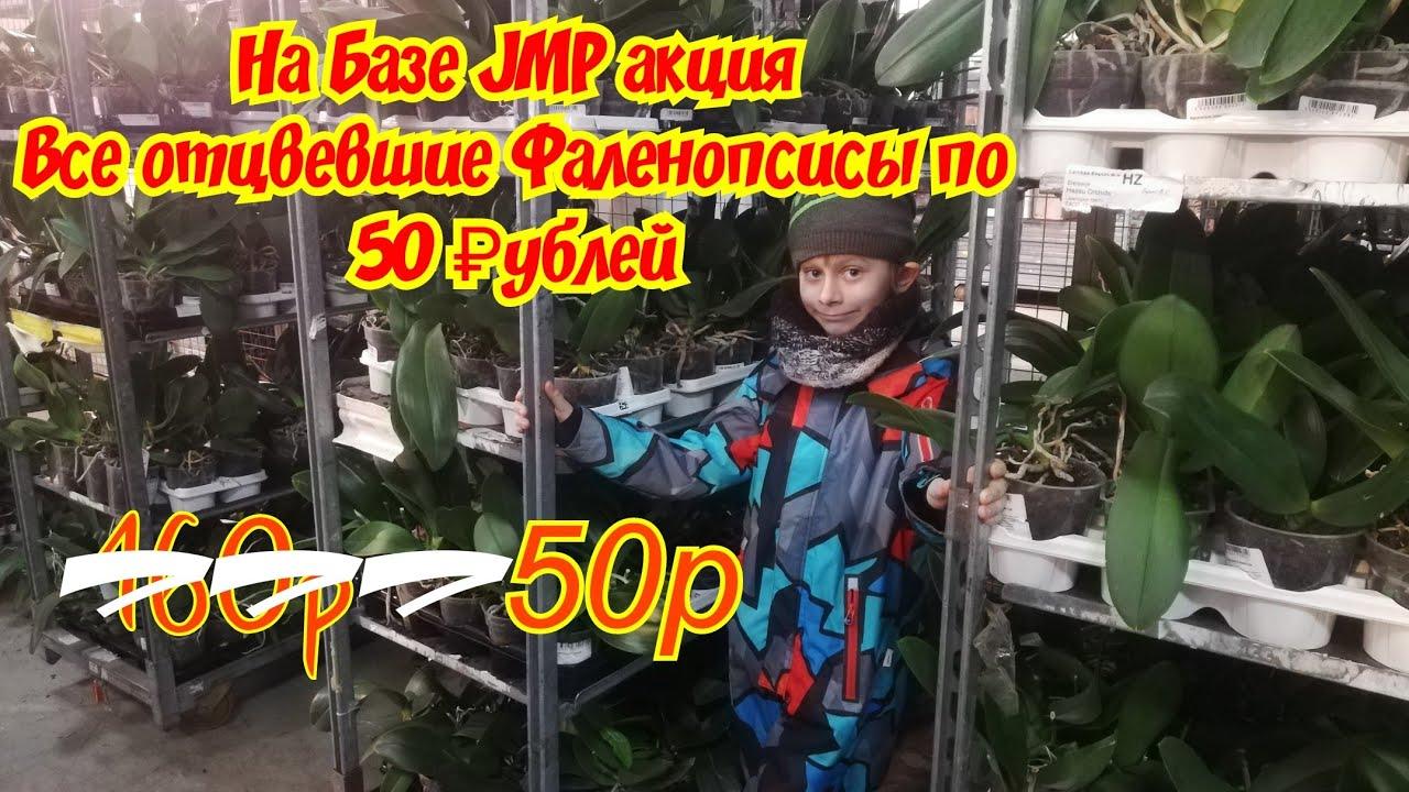 Друзья уценки проданы все! Снова АКЦИЯ в JMP! Шикарные уценки Фаленопсисов по 50 рублей на базе JMP!