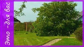 видео Как сделать красивые дорожки в саду: 15 замечательных идей красивых садовых дорожек