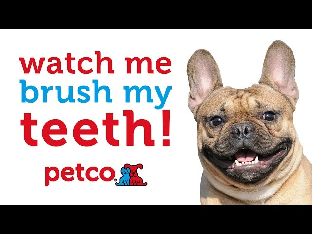 Cats and Dogs Brushing Teeth (Petco)