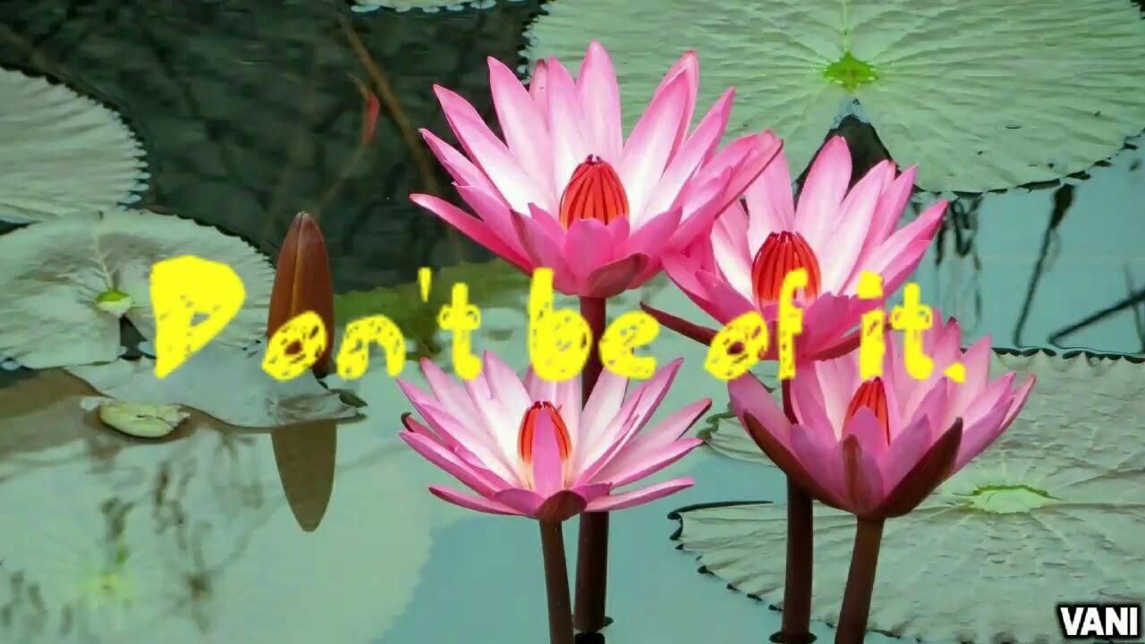 Whatsapp status video live like a lotus flower youtube whatsapp status video live like a lotus flower izmirmasajfo