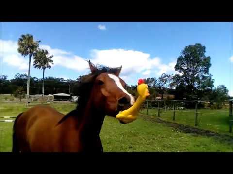 Horse is a musical genius