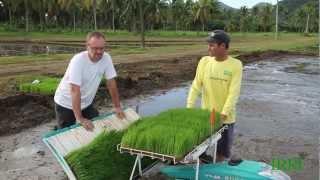 2. IRRI Agronomy Challenge 2: Transplanting Day (20 December 2012)