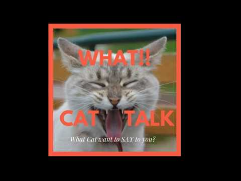 What Cat want to Say to you?