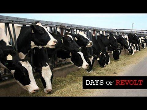 Days of Revolt: All Life is Sacred