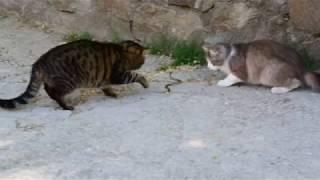 Коты поймали ужа