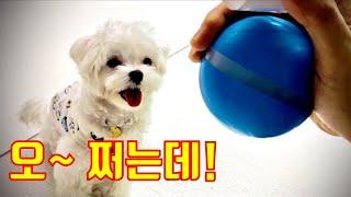 움직이는 강아지 장난감에 푹 빠진 로키! (feat. …