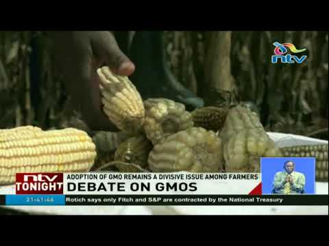 Adoption of GMO remains a divisive issue among Kenyan farmers
