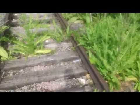 Exploring Abandoned Railroad Tracks - Carol Stream, IL